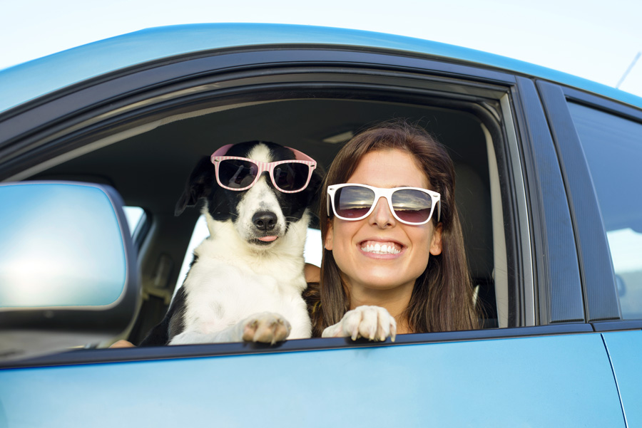dog and owner in blue Prius